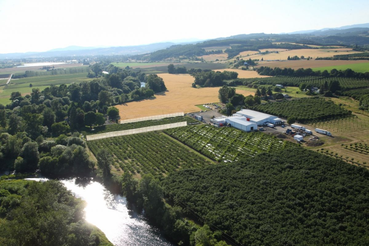 McMinnville and Yamhill County are ripe for agriculture, from grapes to apples to berries. Photo courtesy of HBF International.