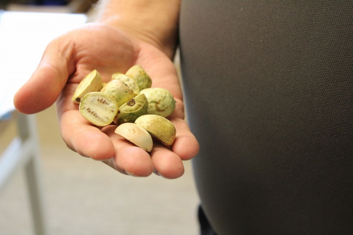 Hurst holds and handful of kiwiberries he had freeze-dried at home for snacking